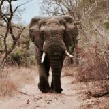 """Spostare l'elefante (la mente inconscia) con una """"spinta gentile"""""""