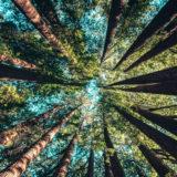 Ritorno alla Natura: come prendersi cura del proprio spazio interiore (e non solo)